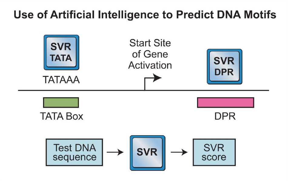 Researchers Use Artificial Intelligence to Identify DNA Activation Code