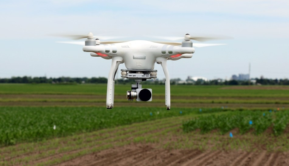Researchers Use Drones to Remotely Evaluate, Predict Timing of Pod Maturity