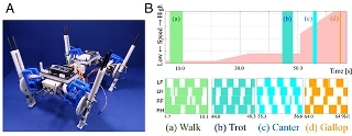 Quadruped Robot Could Spontaneously Change Steps Between Energy-Efficient Patterns