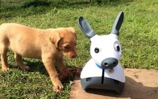 Robot Helpers for Stroke Survivors, Pet-Like Social Companion Robot to be Displayed at UK Robotics Week