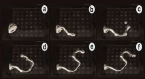 Research Opens Up New Possibilities in Soft Robotics