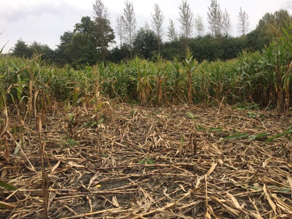 New Drone-Based Method Helps Estimate Crop Damage