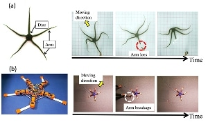 Researchers Develop Brittle Star-Like Robot Capable of Adapting to Physical Damage