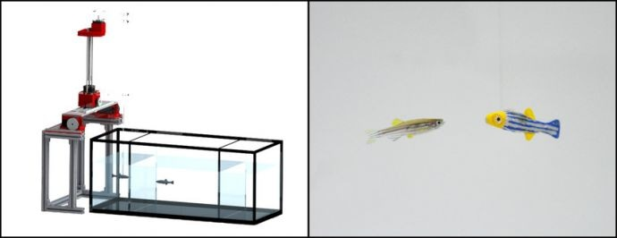 Robotic Fish Sees and Mimics Live Zebrafish in Real Time