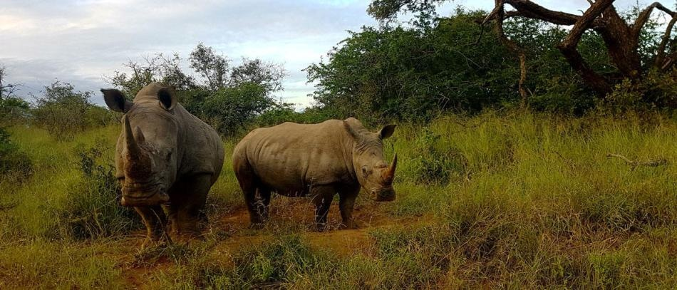 Artificial Intelligence Can Be Used for Monitoring Unlawful Wildlife Trade on Social Media