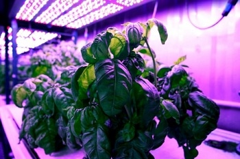 Cyber Agriculture: Machine Learning Can Reveal Optimal Growing Conditions to Maximize Taste