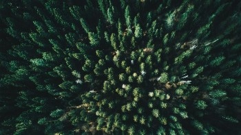 EPFL Doctoral Student Develops Algorithms to Map Out Forests Using Aerial Remote Sensing