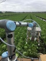 Vegebot Harvests Lettuce Using Machine Learning