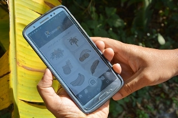 Artificial Intelligence Assists Banana Growers by Scanning for Disease and Pest
